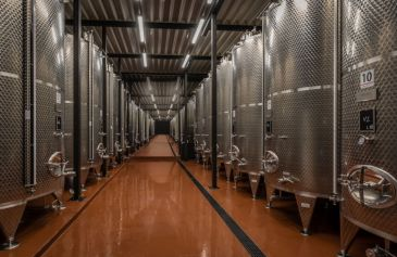 Vinohrady avýroba vína