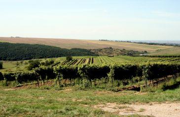 Vinohrady a výroba vína